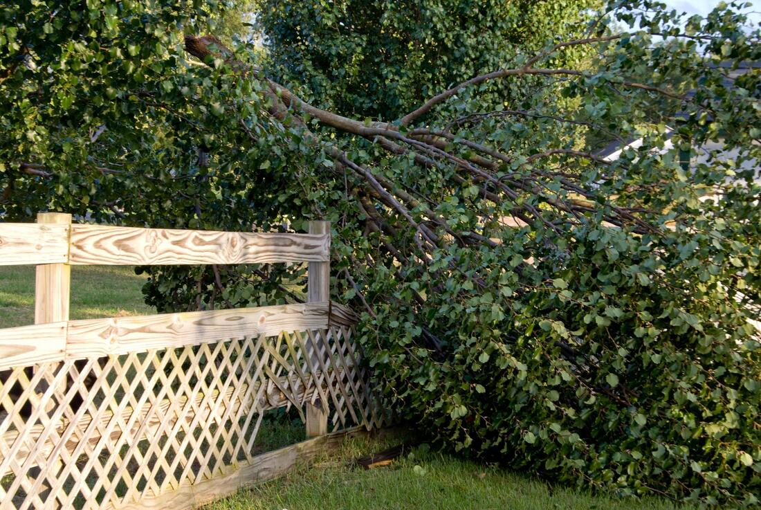 tree fallen need emergency tree service