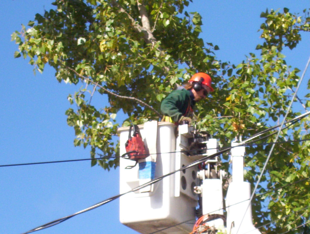 professional tree care worker working on tree cutting