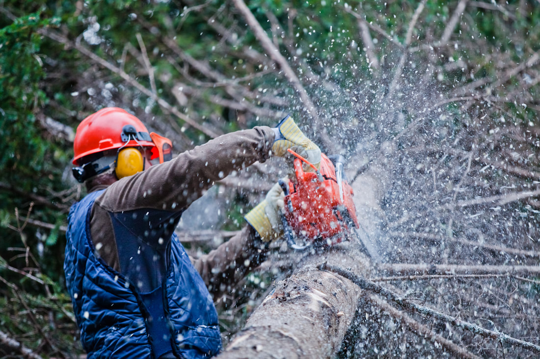 professional tree care worker working on tree removal